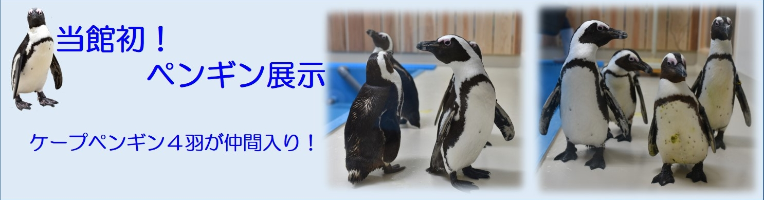 ペンギン展示